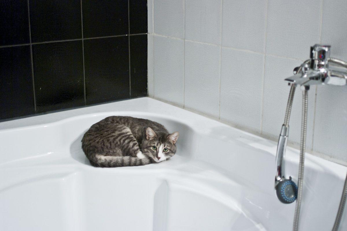 shower001